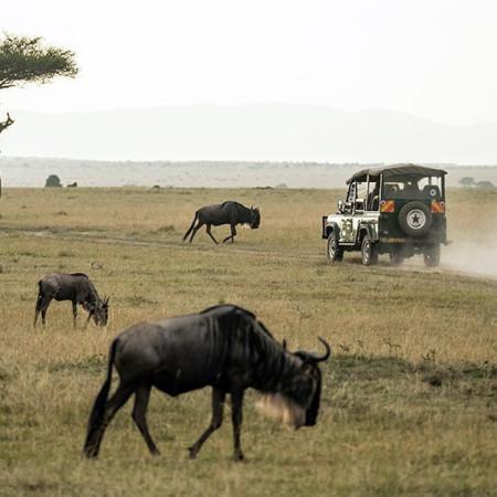 African Hartebeest Safaris