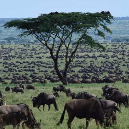Africa Nature Photography and Safaris
