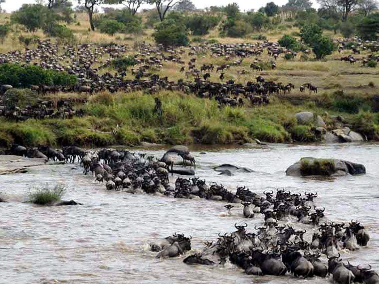 8 Tage - Tierwanderung am Mara Fluss