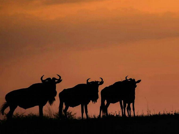 6 Tage - Tansania Wildtiersafari
