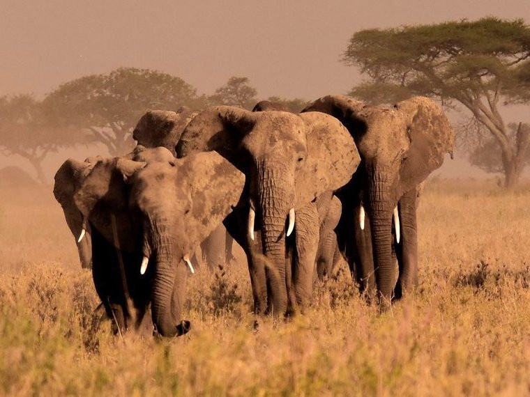 7 Tage - Tansania erleben