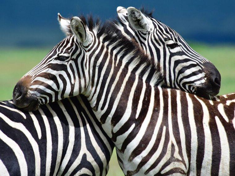 8 Tage - Tierwanderung Ndutu